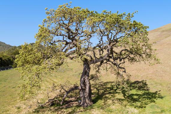 Barboni Ranch Petaluma